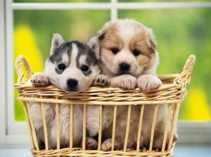 puppy_01
