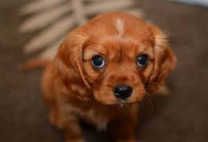 puppy_06