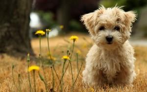 puppy_07