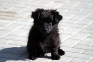 puppy_09