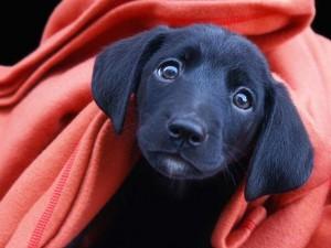 puppy_10