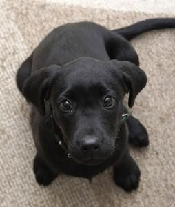 puppy_11