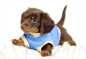 puppy_16