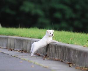 puppy_17