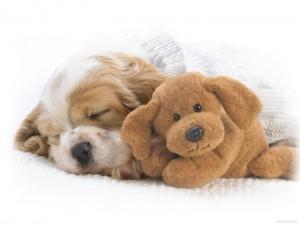 puppy_18
