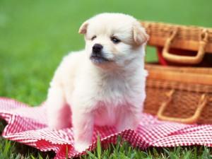 puppy_19