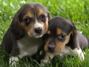 puppy_20