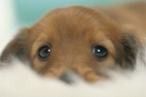 puppy_25